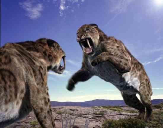 Smilodonsabretoothcat