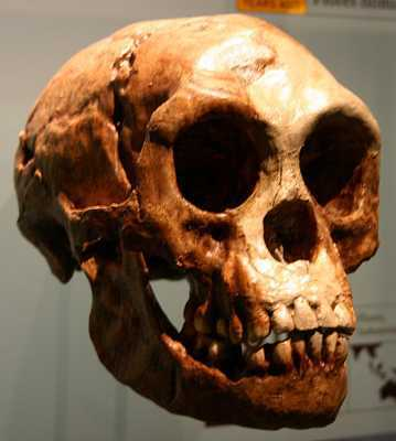 Homo Floresiensis-Wikimedia-Ryan-Somma