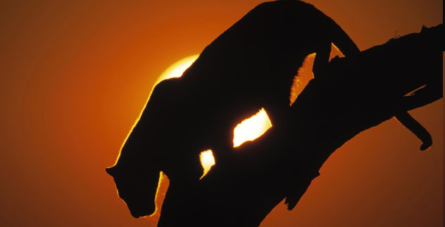 big-kitty
