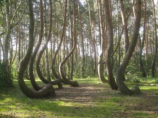 640Px-Nowe Czarnowo-Krzywy Las