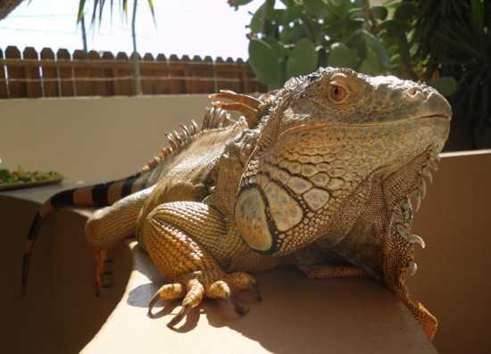 Curious-Reptile-D008D001D00456D4Fef5