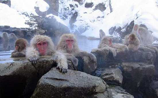 Snow Monkey Bath