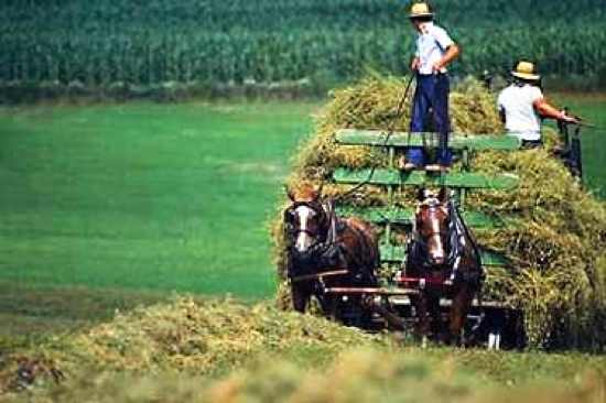 Amish-Farm-Cart