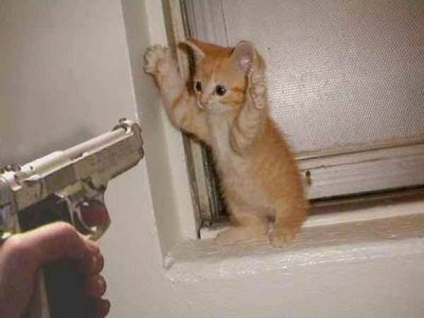 Cat%20Shooting%20Gun%20Kitten%20Kitty%20Shot%20Cute