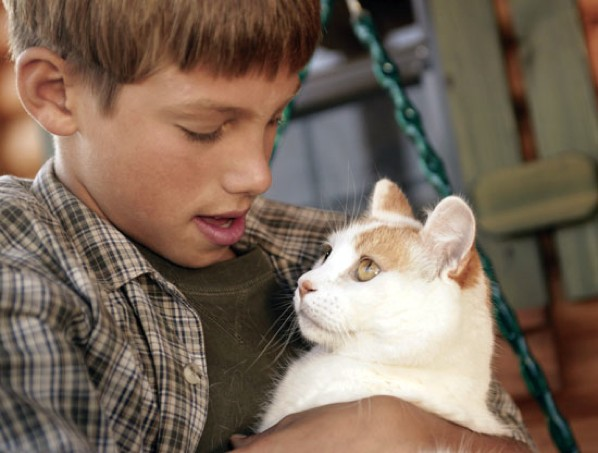 Boy-And-Cat-1090481