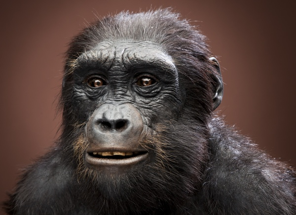 In your opinion, do you beleive in the fact that humans (us) were evolved from apes?