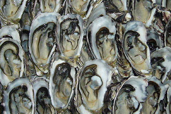 Coffin-Bay-Oysters11