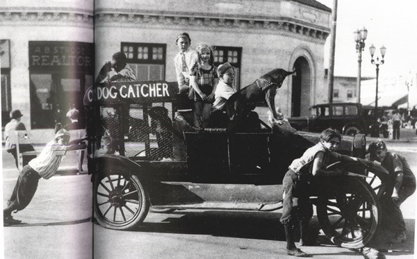 Dog-Catcher
