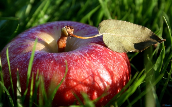 grass_in_apple_fruit-1920x1200.jpg