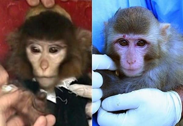 Monkey2N-7-Web