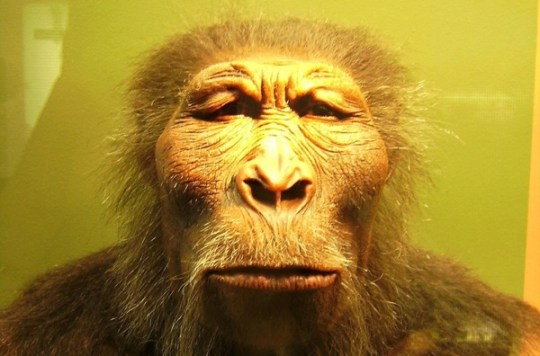 Paranthropus Boisei