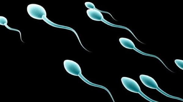 Sperm New Ss