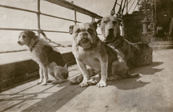 Titanic Dogs On Titanic