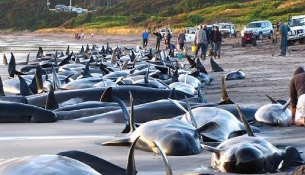 Whalesbeached Johnnievaart