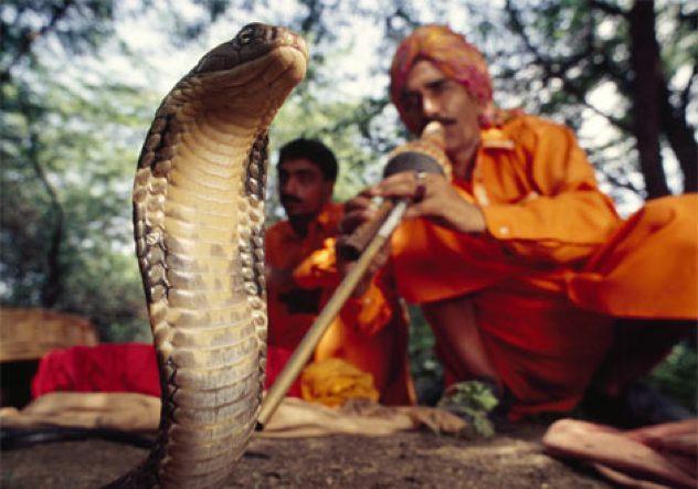 Snake-Charmer 272527