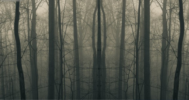 creepy_woods3
