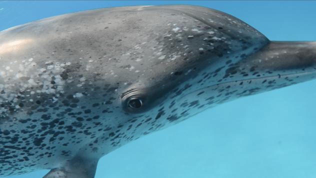dolphin-closeup