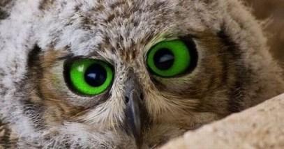 eyes-e1379150344882