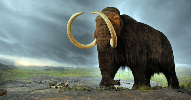 10_Woolly_mammoth_FT