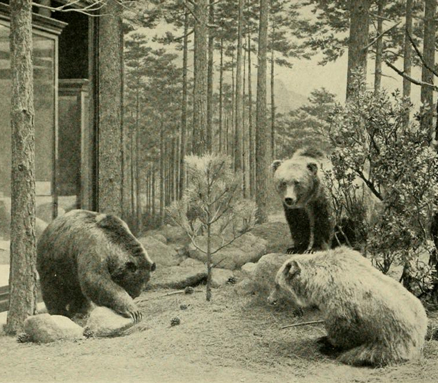 Extinct animal sightings - photo#20