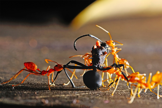 3- ants