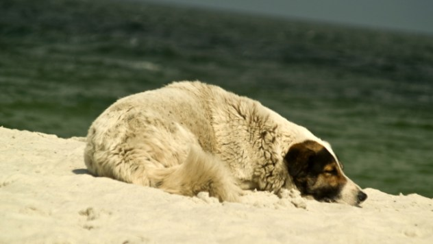 Lonely Dog on a beach
