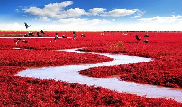 red-beach-panjin-china
