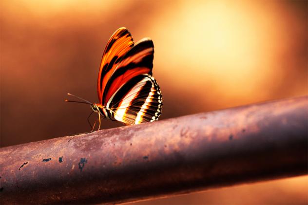 3- butterfly