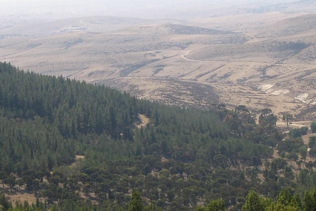 800px-Yatir_Forest,_Israel_no.1