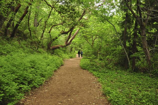 1 woods