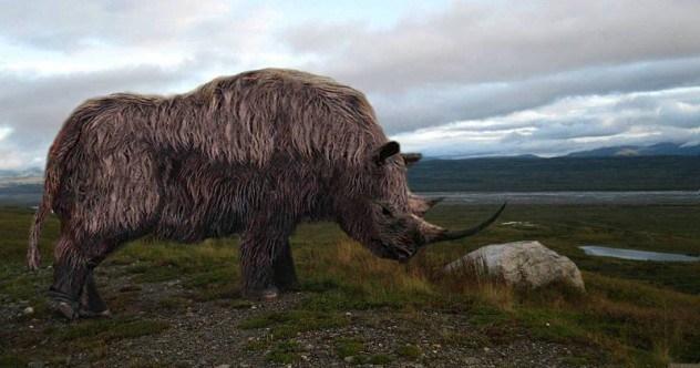 1-wooly-rhino-e1421884117959