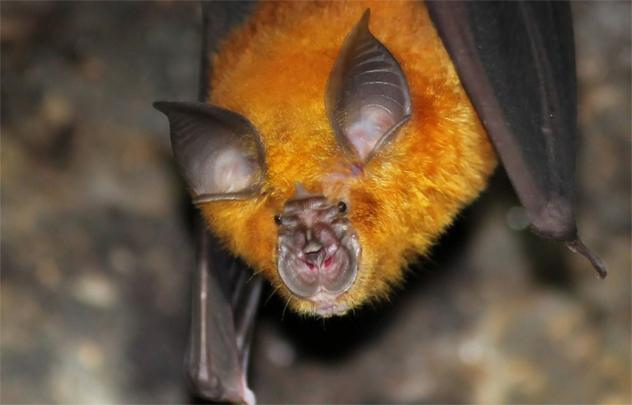 3- horseshoe bat