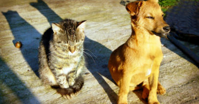 history_dog_and_history_cat