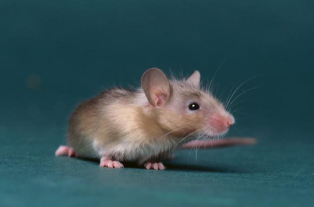 mouse paste