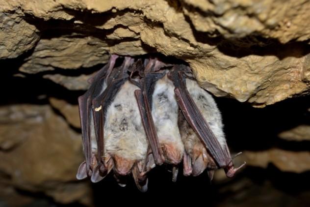 sleepy cuddly bats