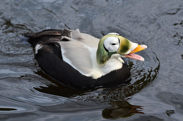 4 quack