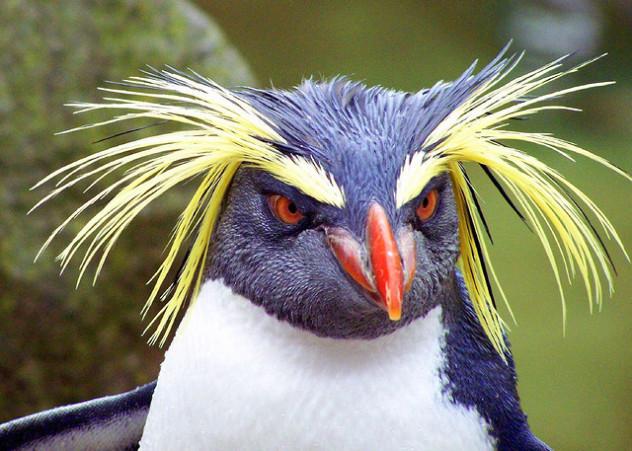 9 tropical penguin