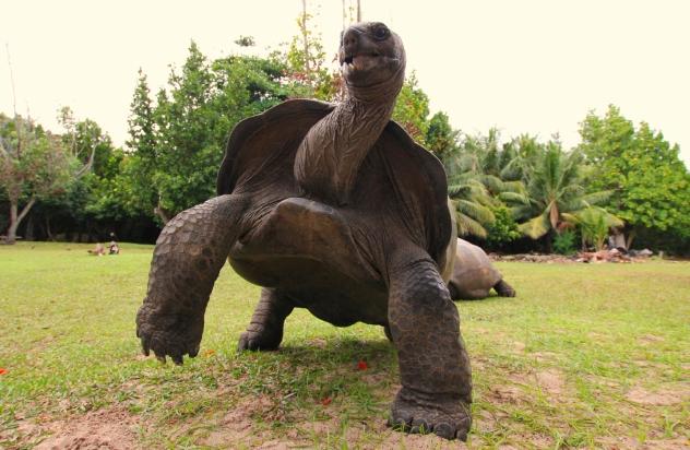 6_Turtle
