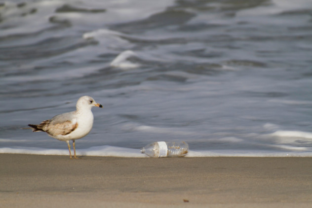 beachtrashanddisgustedseagull