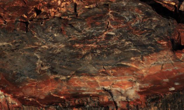 3-petrified-wood-478138254