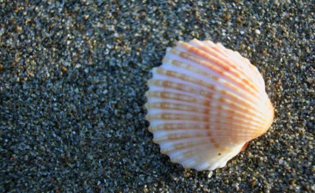 3a-seashell-87451660