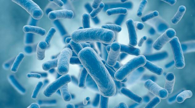 4-bacteria-177239690