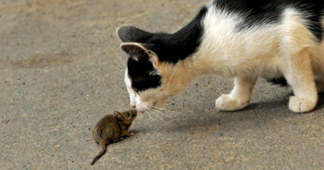 9-cat-and-mouse-461082459