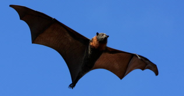 4-possible-feature-flying-fox-92100643