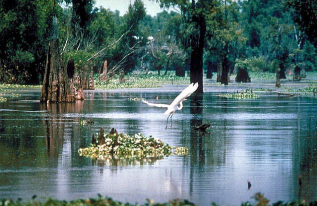 1-louisiana-swamp