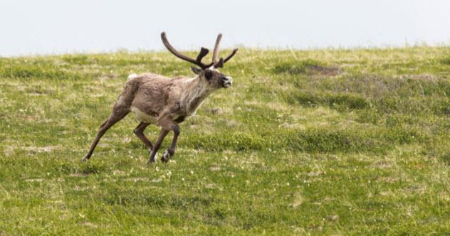 4-getaway-reindeer-475981795