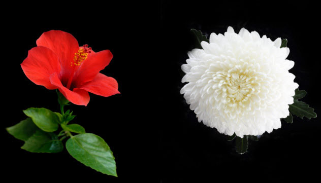 6-red-white-flower