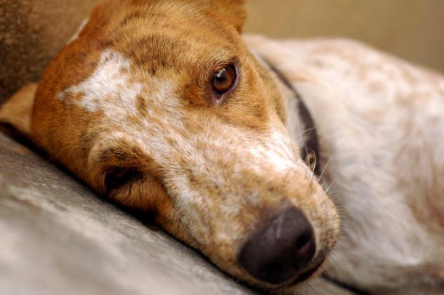 10-sad-dog_000003892258_Small