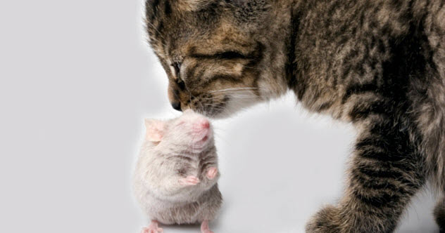 10b-cat-mouse-friendship_000003035479_Small