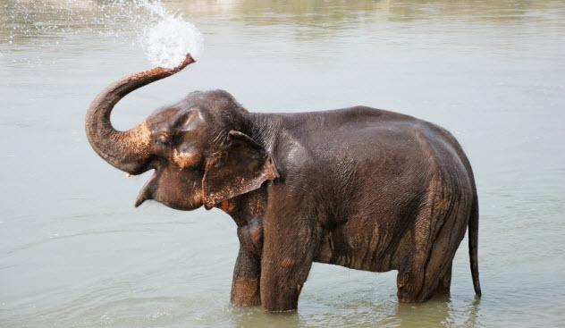 8-elephant_000021726504_Small